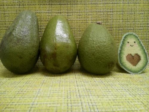 Авокадо - по бесплатной схеме Ольги Петренко
